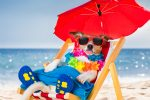 Why Summer Is The Greatest Time For Salespeople